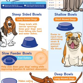 The right dog food bowl